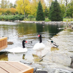 Beautiful park in Mezhyhiria residence.