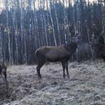 Animal world in Chernobyl