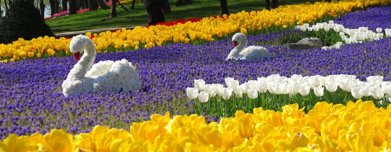 Tulips festival in Kiev